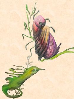 Sketch page seahorse & bird