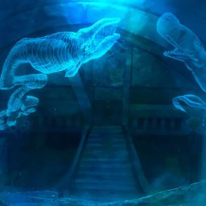 Whale Lantern Book
