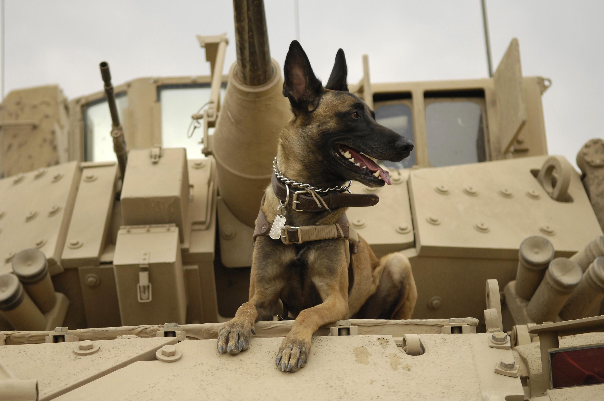 dog-1174482.jpg