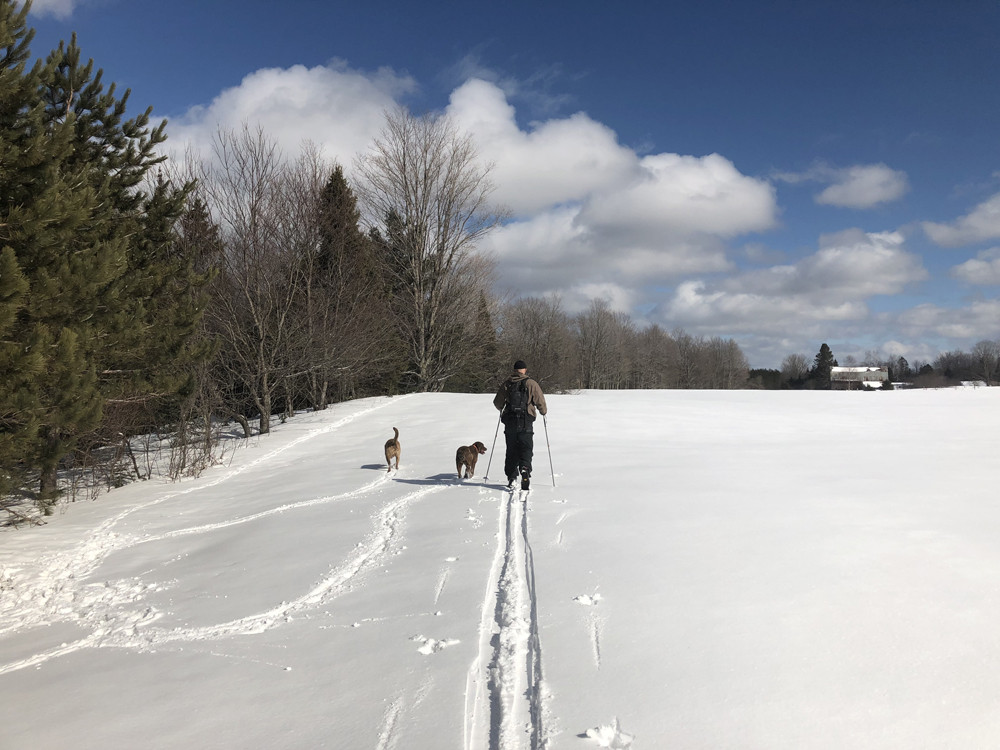 Cross-country skiing with dogs