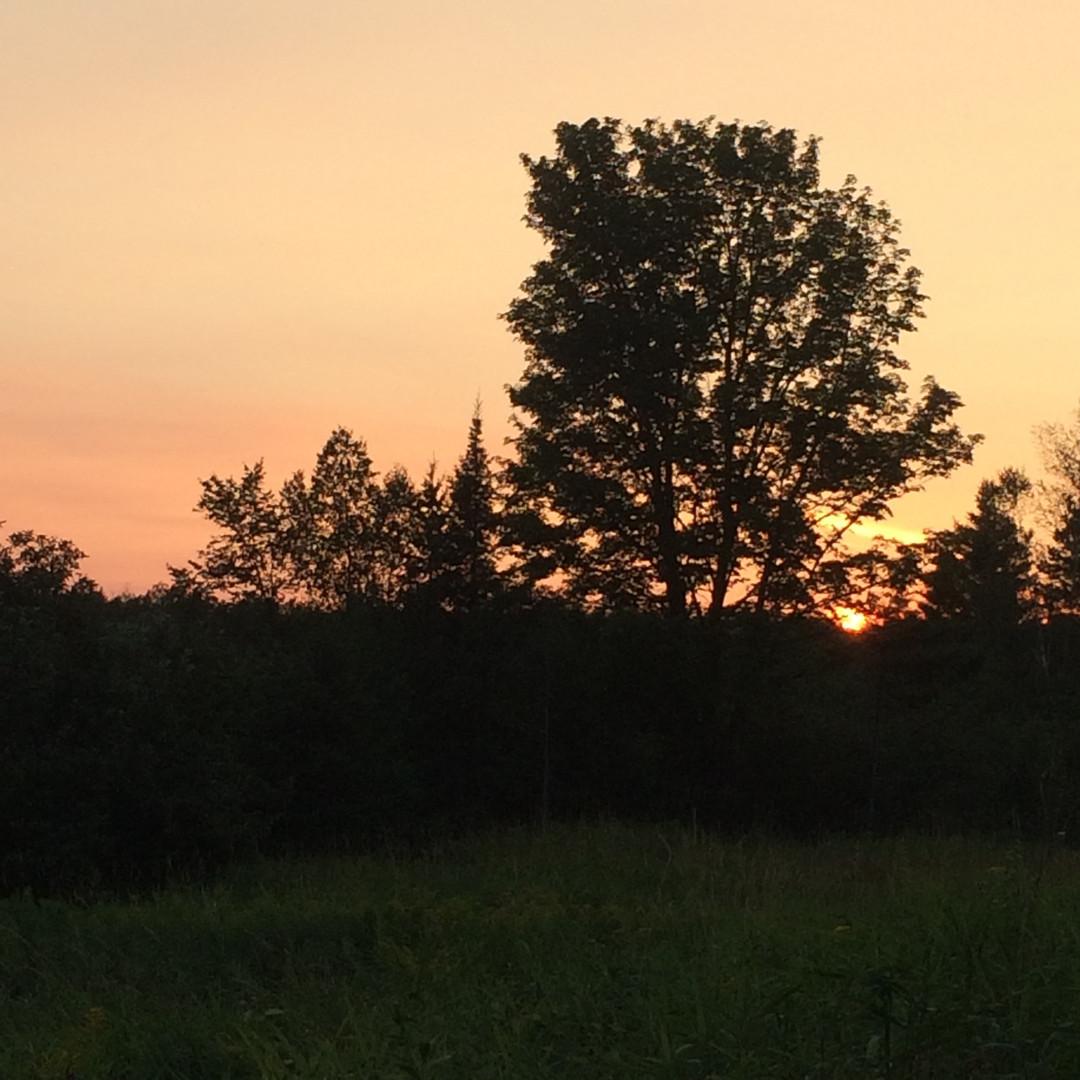 TheFarm_Sunset.jpg