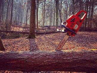 Tree%20JPEG_edited.jpg