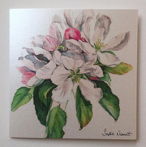 Apple Blossom SN36