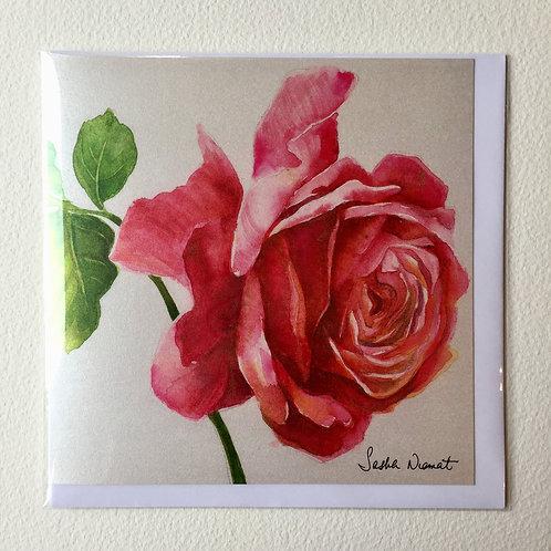 Rose SN11
