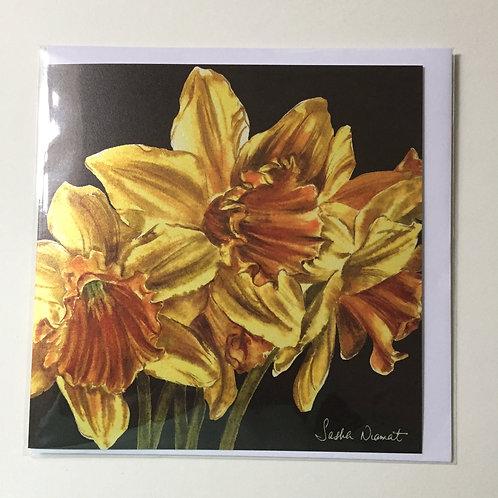 Daffodils SN45