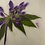 Thumbnail: Rhododendron