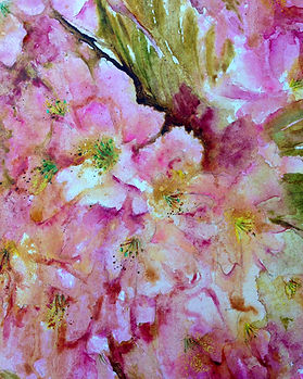 spring blossoms, watercolour, watercolor, cherry blossom, watercolor flowers