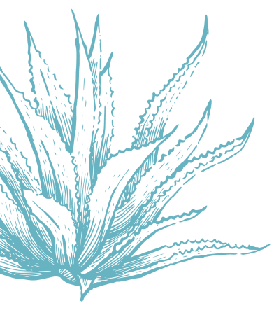New Agave-450h.png