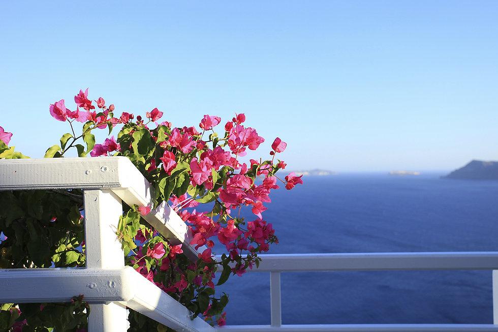 flowers-pink.jpg