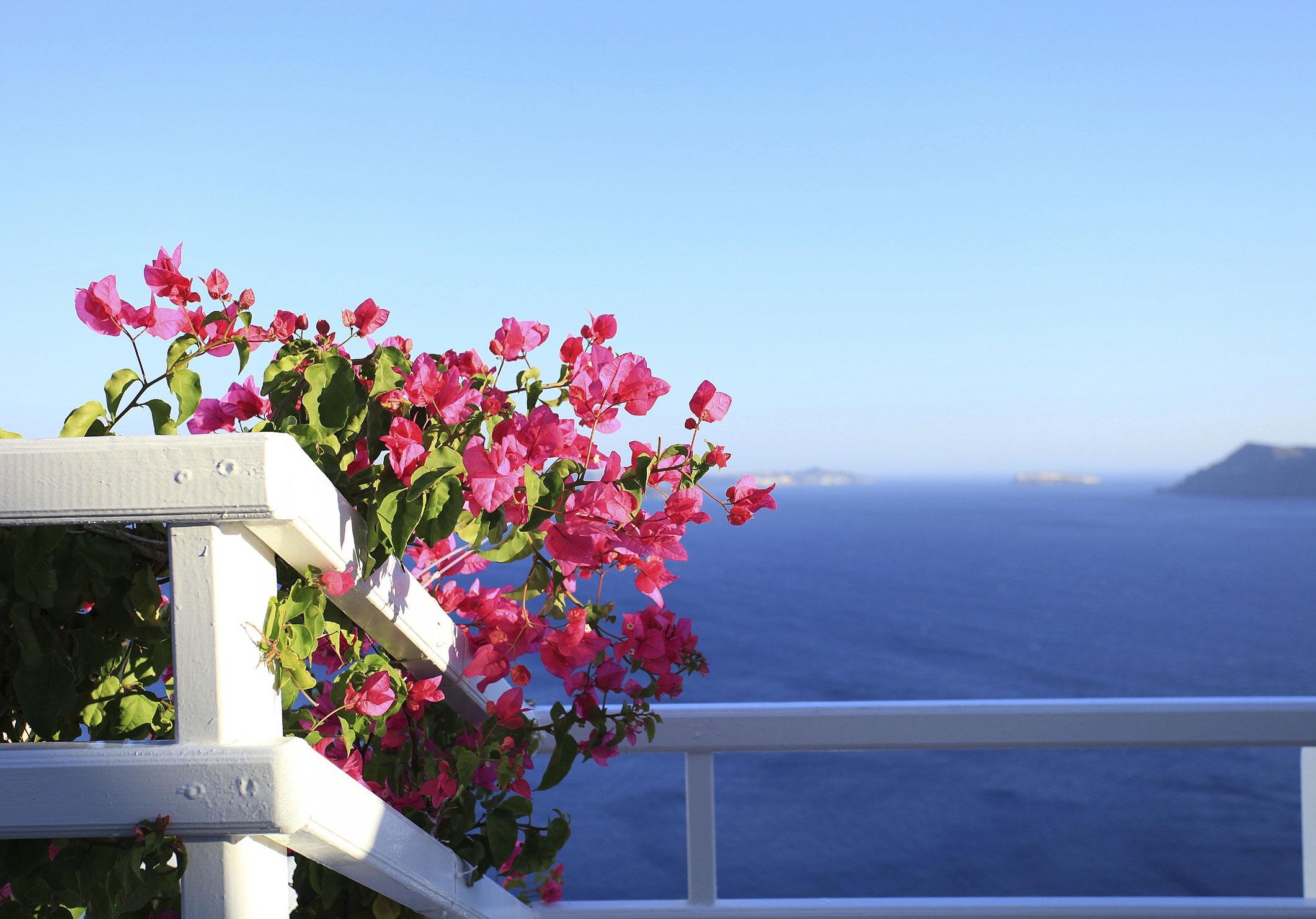 flowers-pink-web.jpg