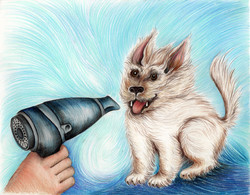 The Ugly Dog Book blowdryer