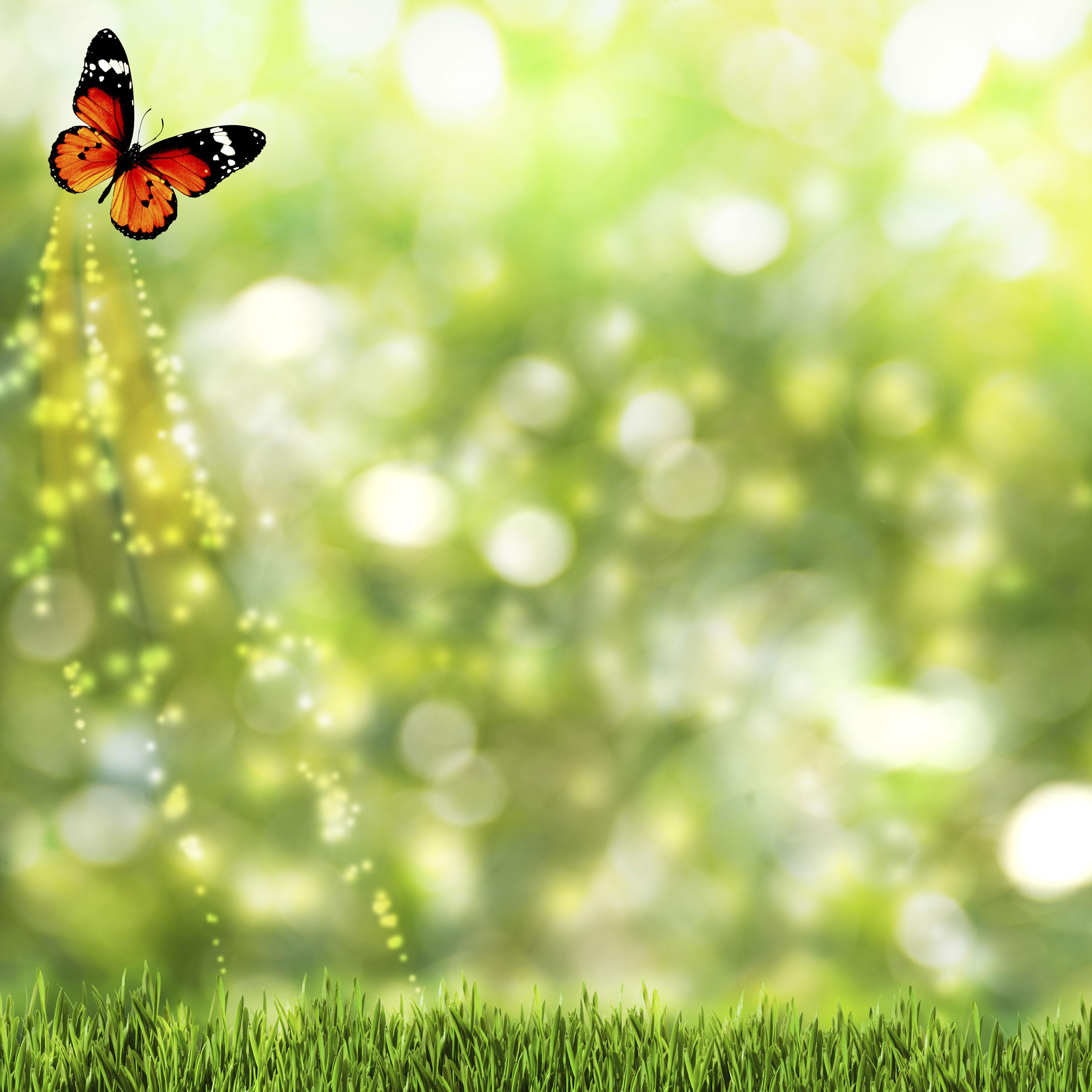 butterflyweb.jpg
