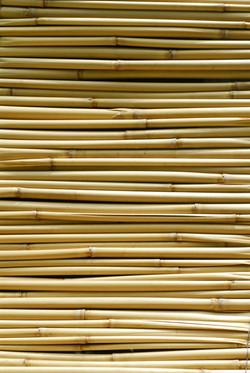 bambooweb.jpg