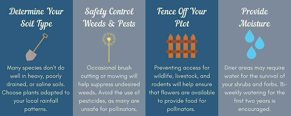 Pollinator website infographic.png