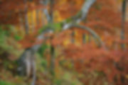 Nationalpark_08.jpg