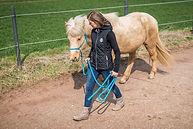 Pferdegestütztes Mentaltraining