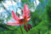 Nationalpark_04.jpg