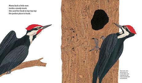 mama nest interior woodpecker.jpg