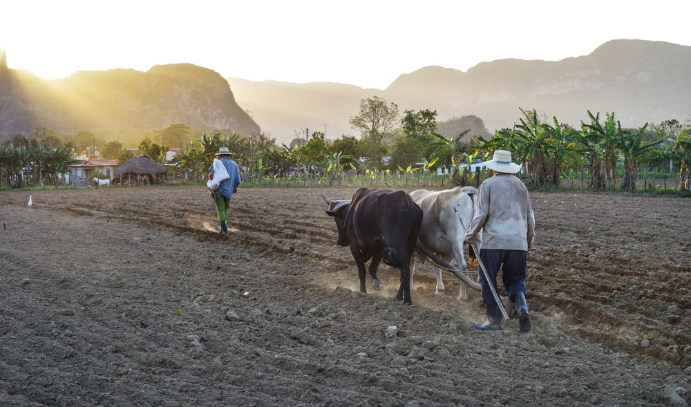Agriculteurs Cubains