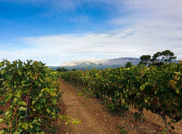 - Vignes & Montagne Sainte-Victoire -