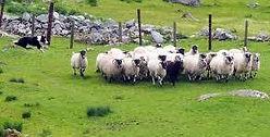 Kissane Sheep Farm Ring of Kerry.jpg