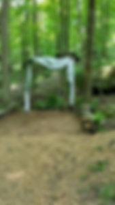 woods 2.jpg