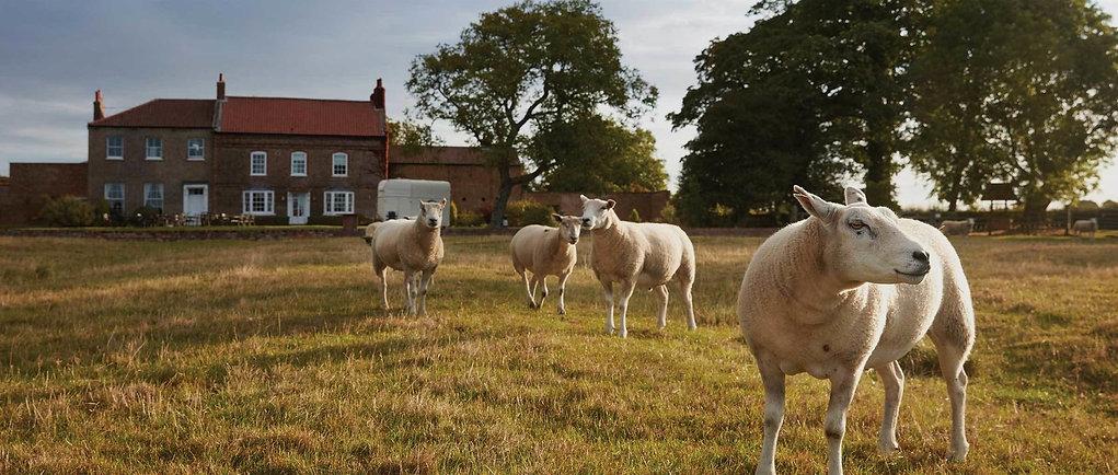 spinks farm.jpg