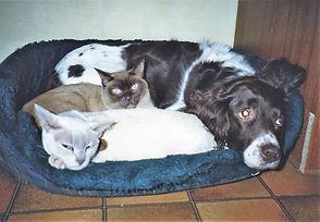 Sophie, Charlie & Oscar cuddled up toget