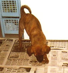 Honey as a puppy 2.jpg