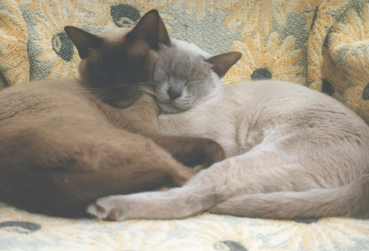 Charlie & Oscar