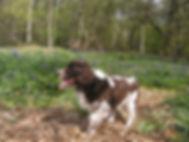 Apr02 Woods Sophe 2 - Copy.JPG