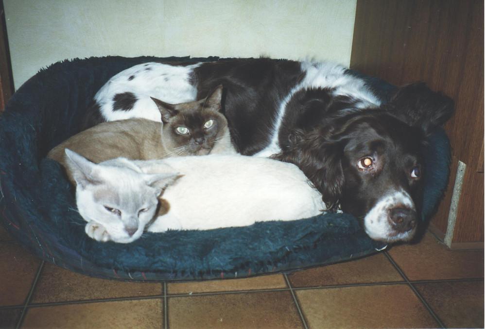 Charlie, Oscar & Sophie dog