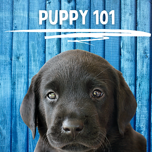 Puppy 101 (1).png