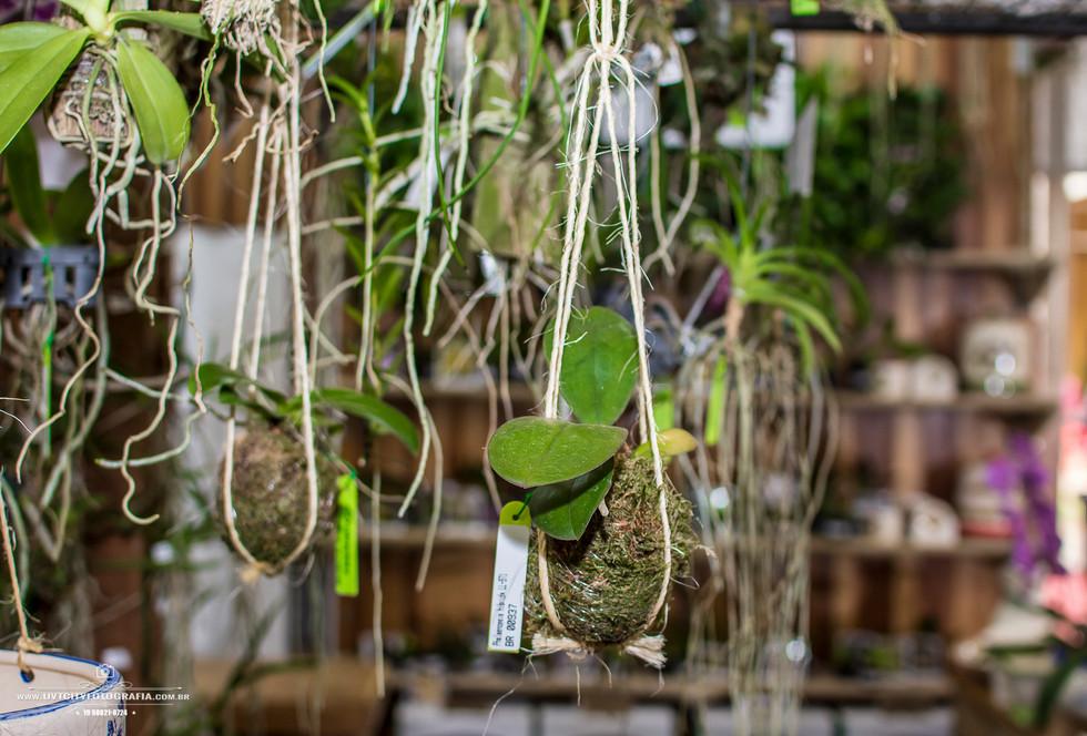 fotos-enflor-expoflora-holambra-2614.jpg