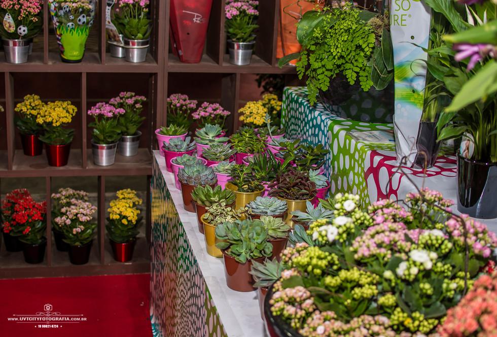 fotos-enflor-expoflora-holambra-2709.jpg