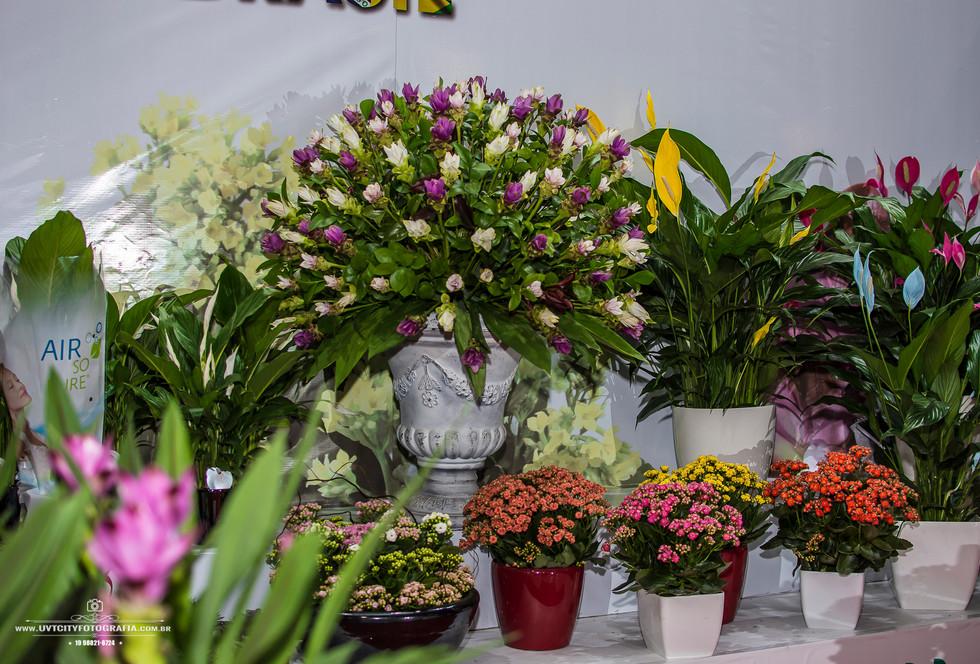 fotos-enflor-expoflora-holambra-2703.jpg