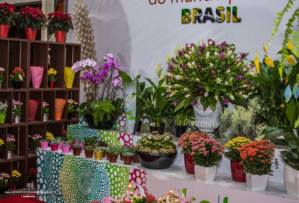 fotos-enflor-expoflora-holambra-2713.jpg