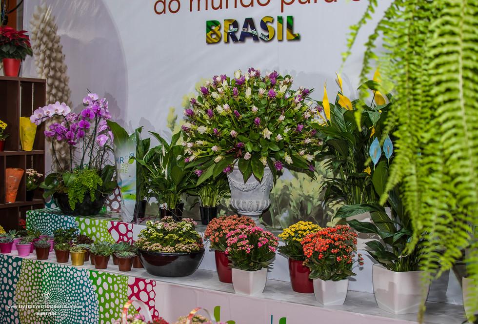 fotos-enflor-expoflora-holambra-2711.jpg
