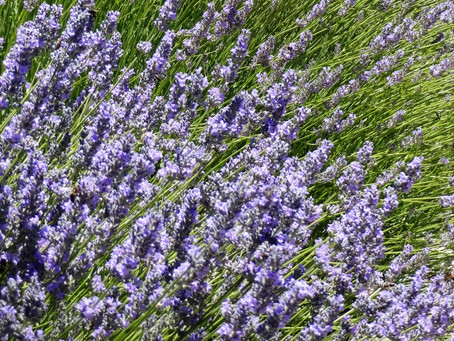 Wake up and smell the lavender