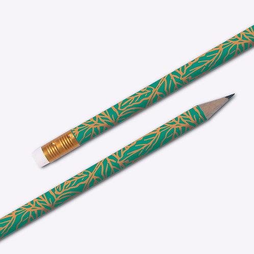 Crayon fougère