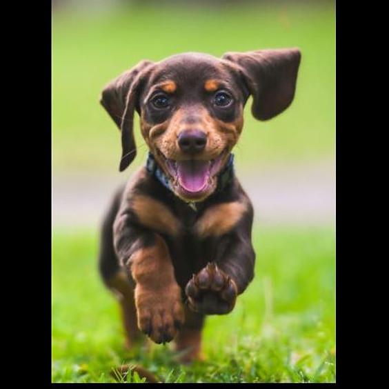 Welpen- und Junghundetraining - hundum gesund von Anfang an (1)