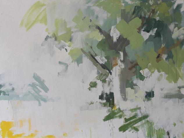 Summer Oak Tree 1