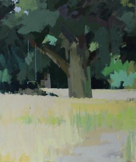 Oak tree swing