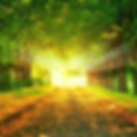 herfst-achtergrond-met-een-weg-met-gele-