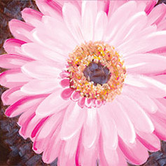 canvas.gerbera.jpg