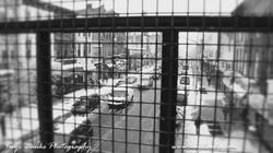 STREET (28 of 40)