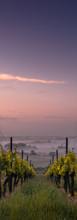 vineyard_sunset.jpg