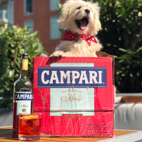 MARSH HOUSE TO HOST CAMPARI & CANINES THURSDAY, AUGUST 26, 2021