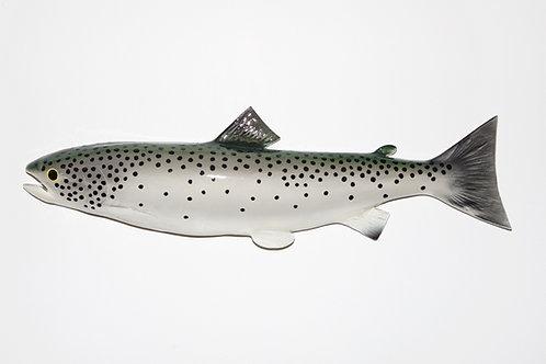 "Atlantic Salmon 22.5"""