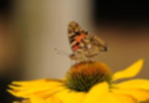 bloom-blossom-butterfly-158253.jpg